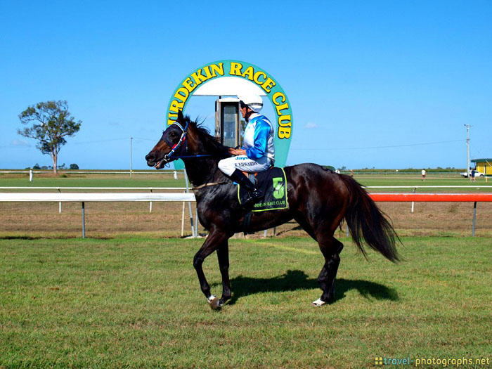 burdekin race horse