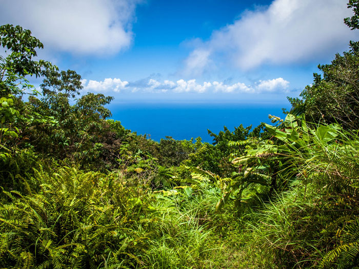 hiking saba rainforest view
