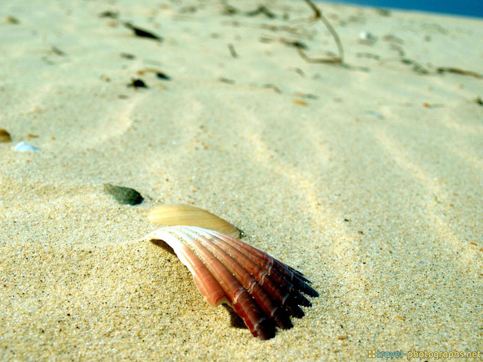 shell on lonely island gold coast